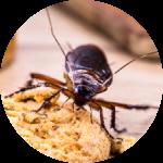 A roach infestation