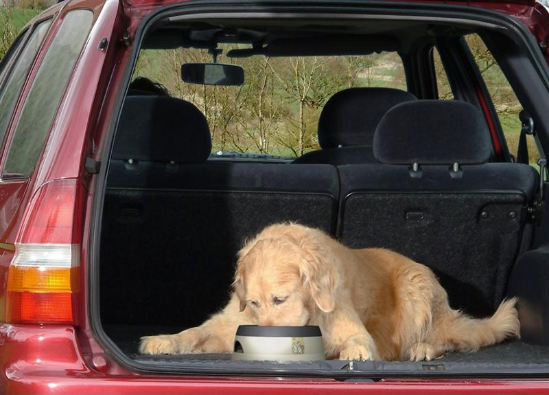 Provide animals with a means to hydrate and cool off inside of a car.