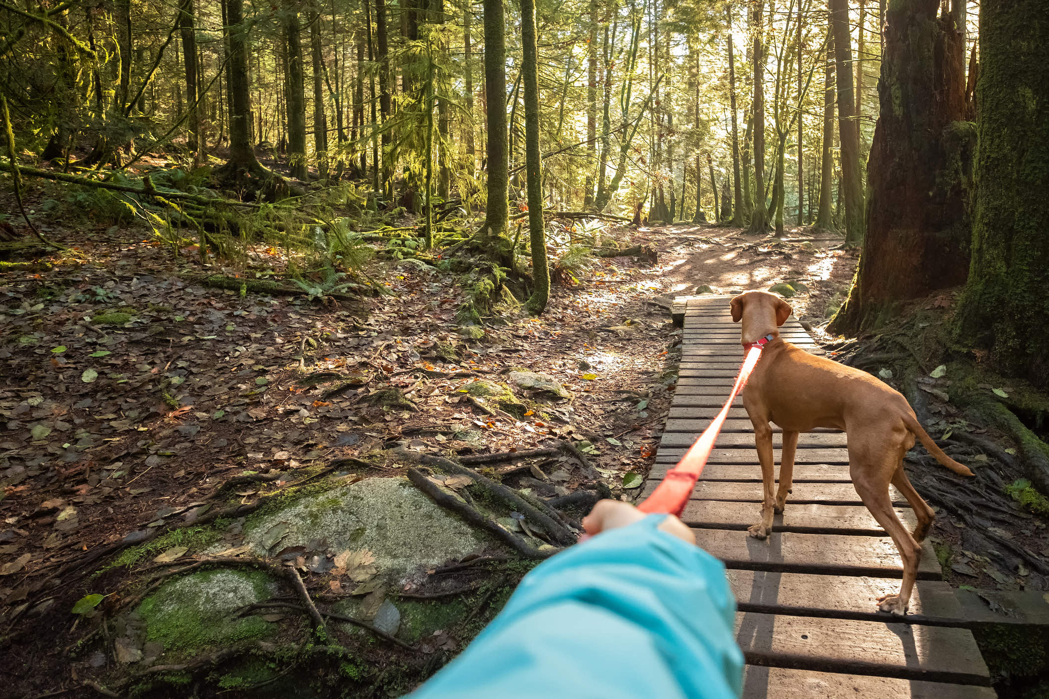 Person on wooden trail in forest