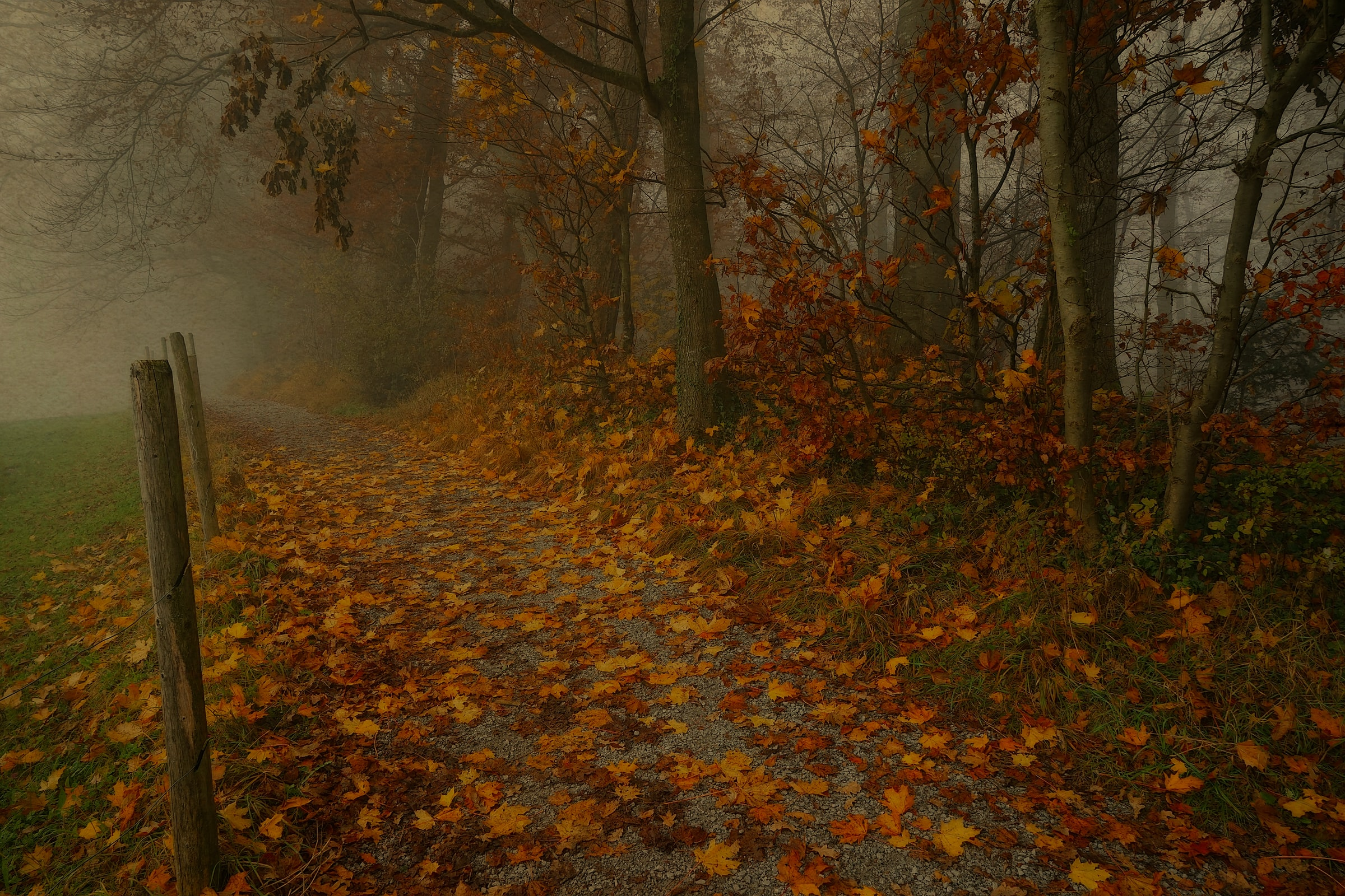 Scenic pathway landscape in fall