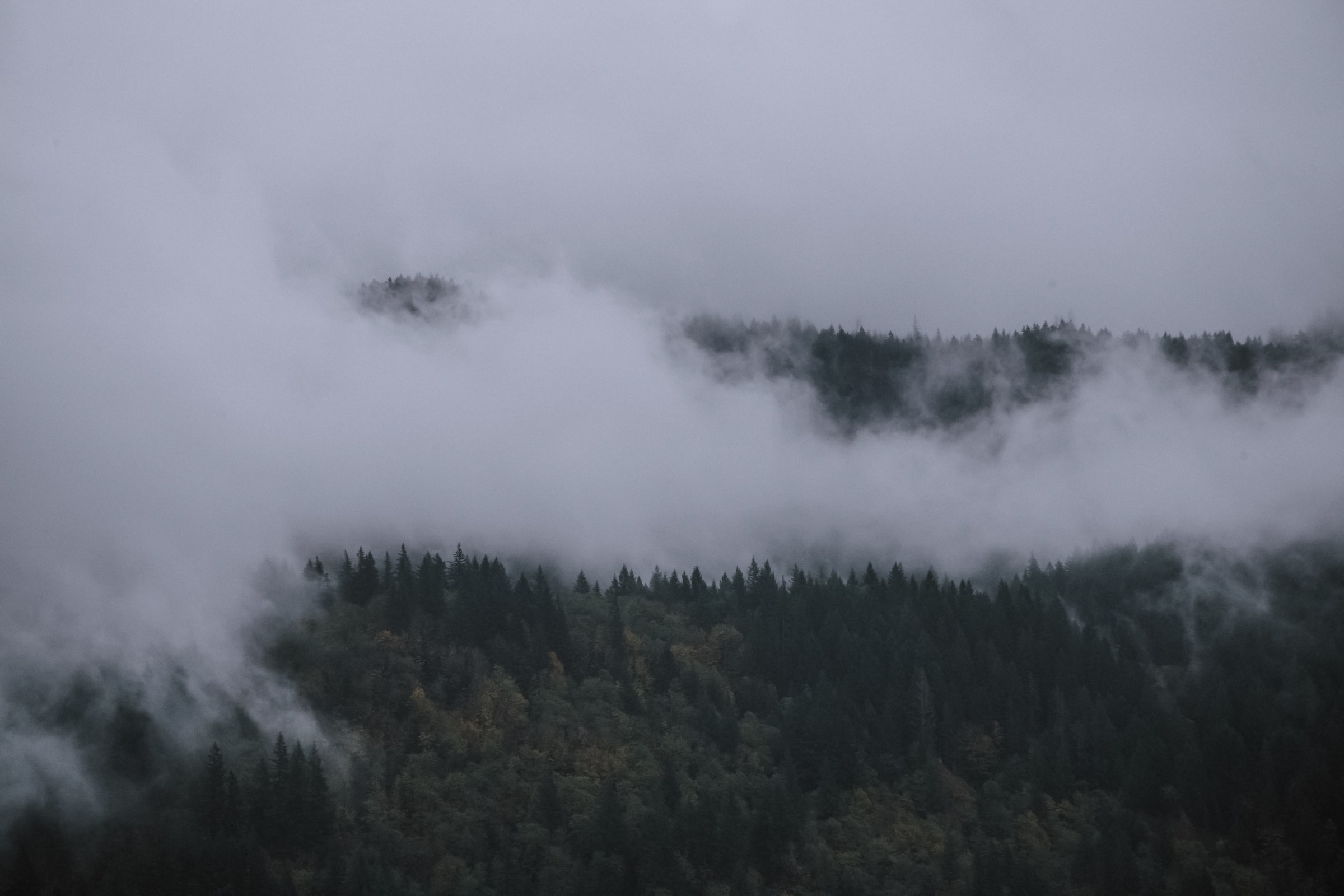 Fog covering hill of trees