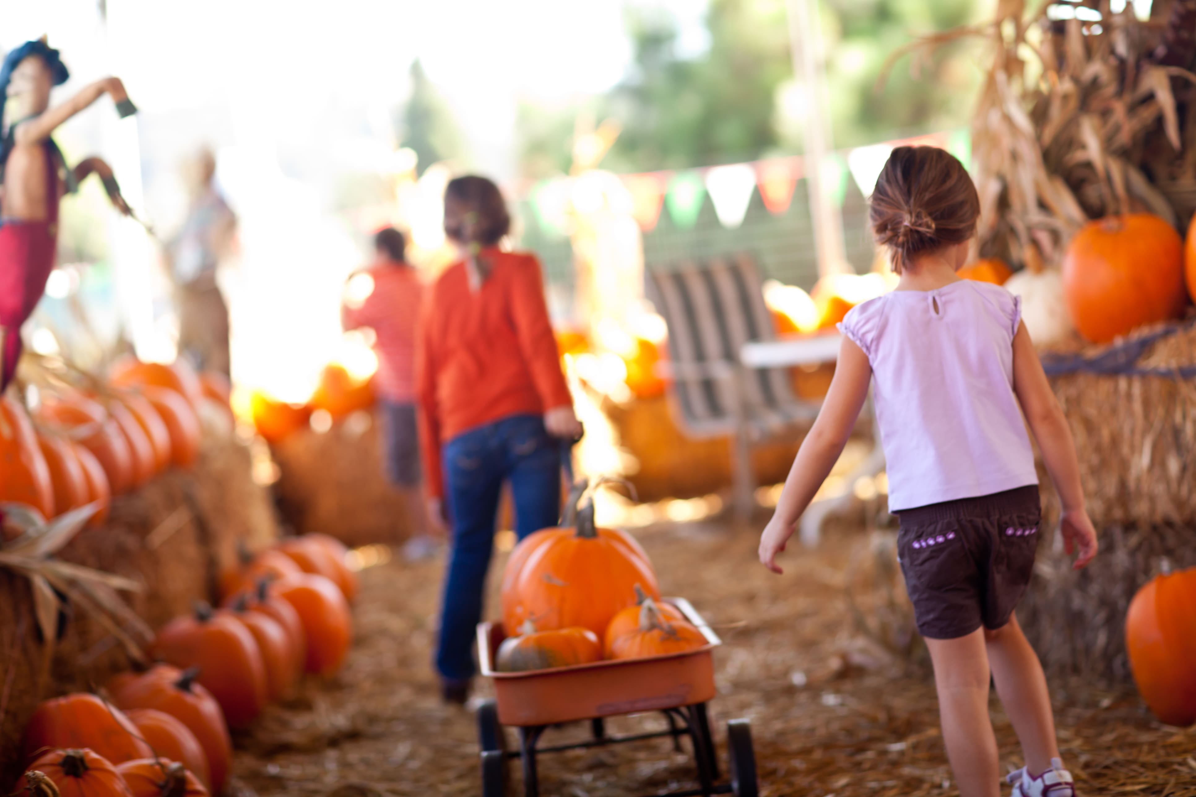 Children pulling wagon full of pumpkins