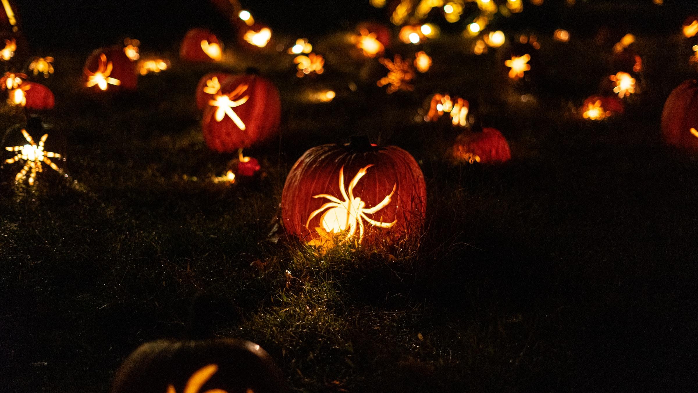 Field of jack-o-lanterns lit up