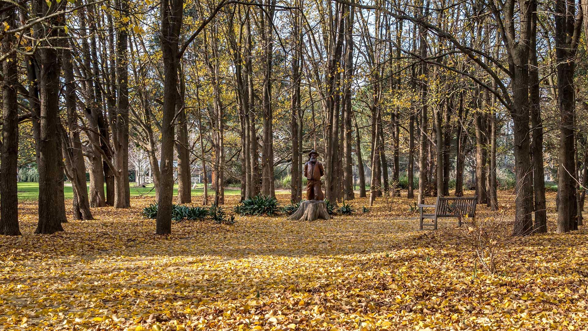 Elm forest at the Sale Botanic Gardens.
