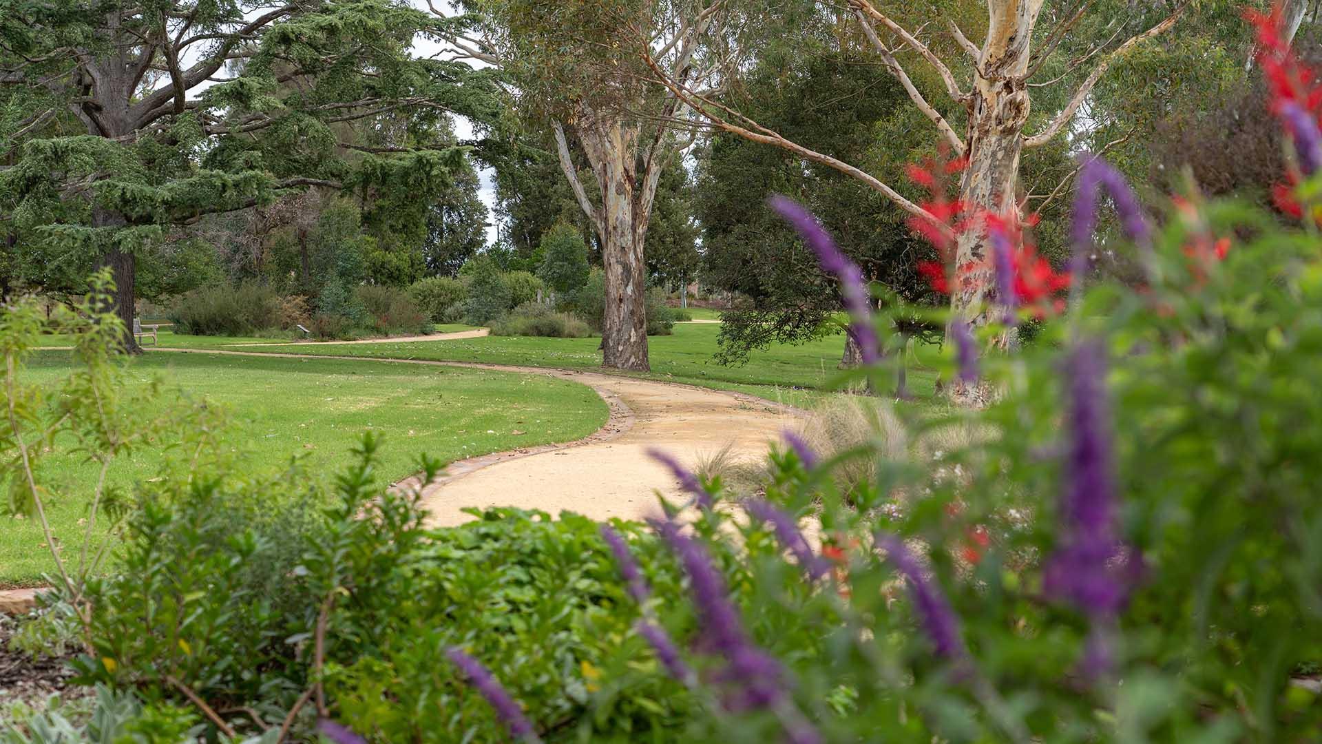 Sale Botanic Gardens path with flowers.