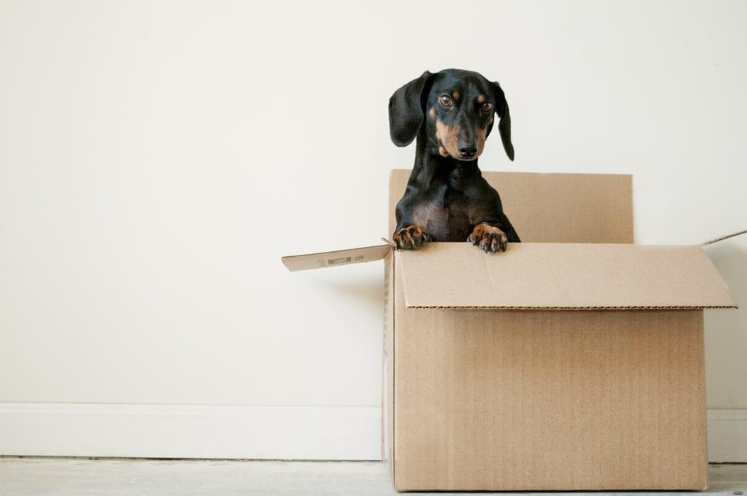Covid-19 : comment faire pour déménager ?