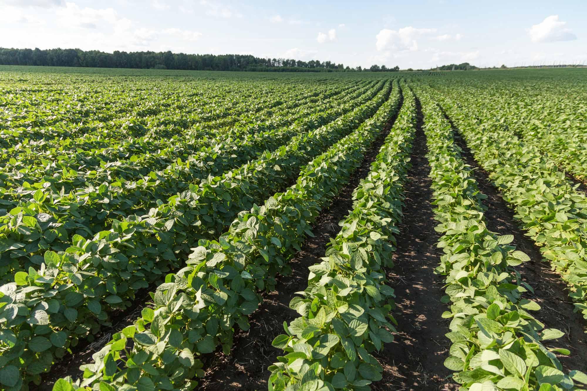 KPM Analytics Farming