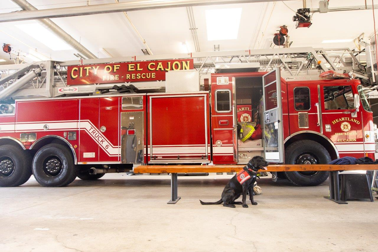 A New Era of Fire Dogs