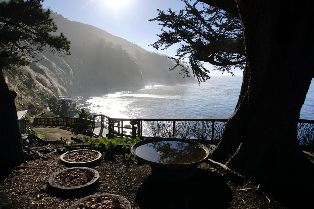 A photograph of a large tree in silhouette. In the background are cliffs and the ocean.