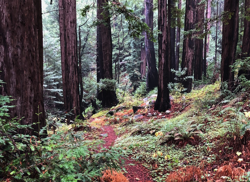 Love Thy Nature: Forest Bathing for Homecoming and Belonging