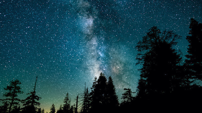A view of the stars and night sky through the trees