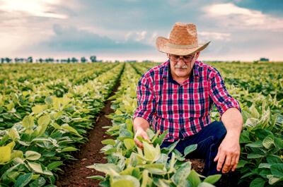 Distribuidores de productos agrícolas