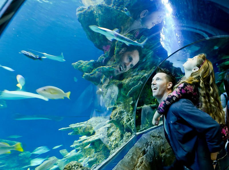 A father and his daughter watching the fish in the Ocean Tunnel at Sea Life London.