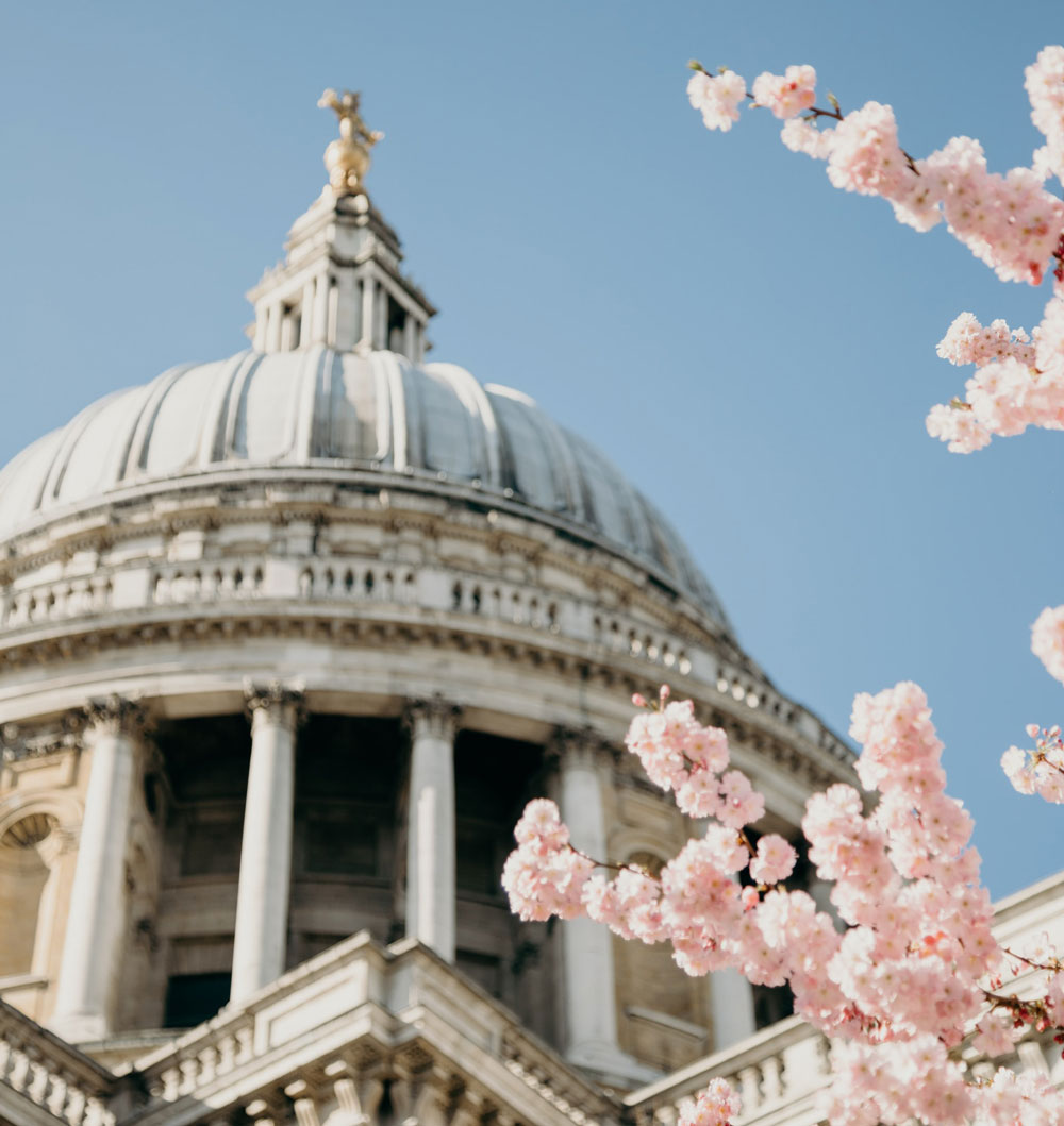 Soft-focus view of St Paul's Cathedral against a blue sky through a frame of cherry blossom.