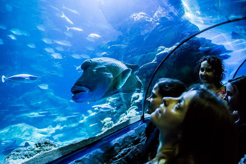 Mesmerised guests looking up at the fish in Sea Life London Aquarium.