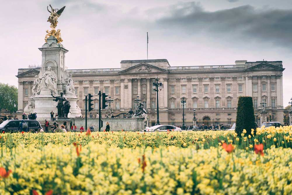 View of Buckingham Palace with daffodil and poppies in foreground.
