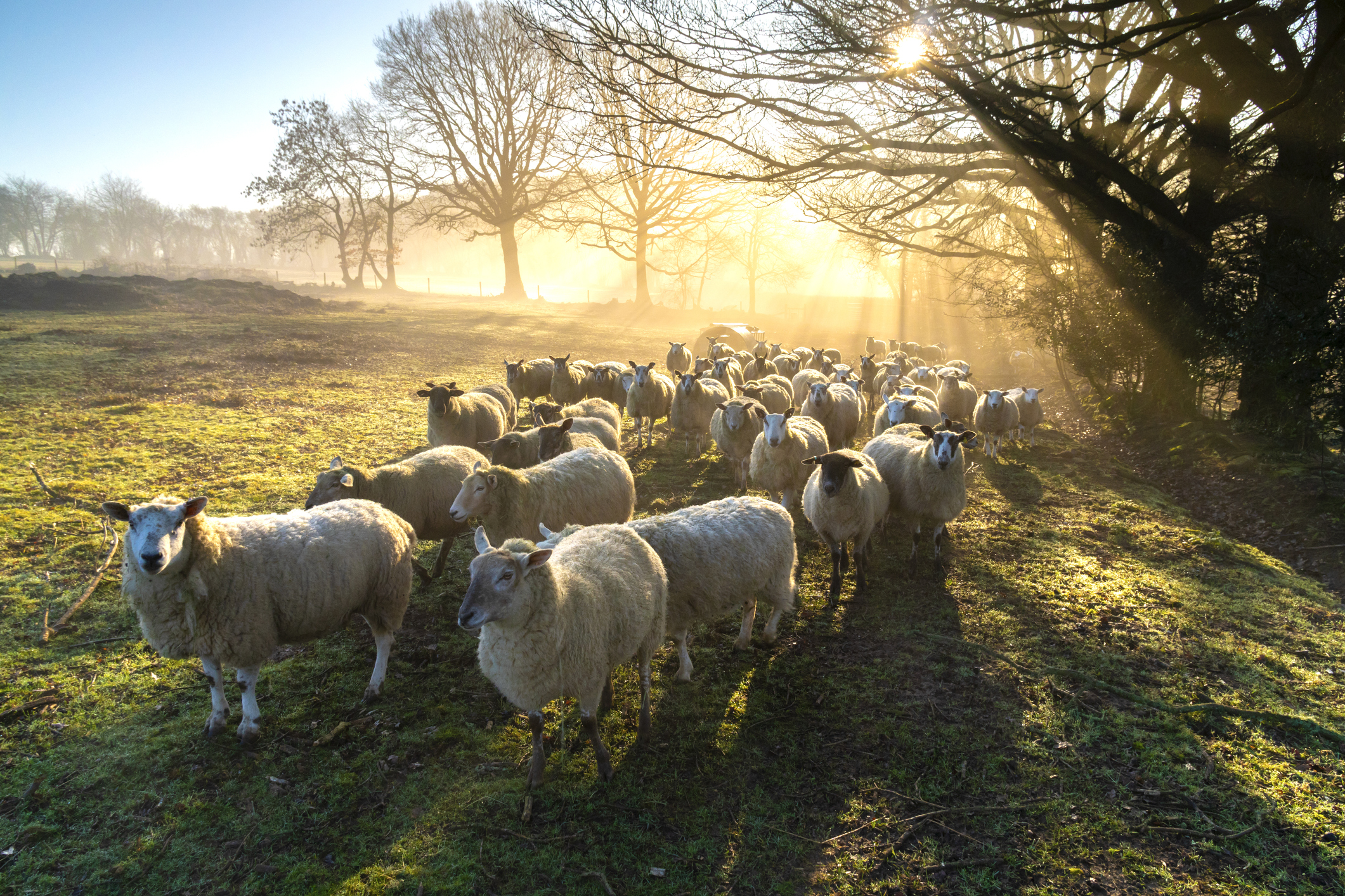 What does Qurbani mean for Muslims?