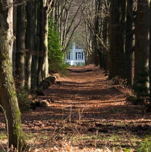 vrijstaand huis in bos