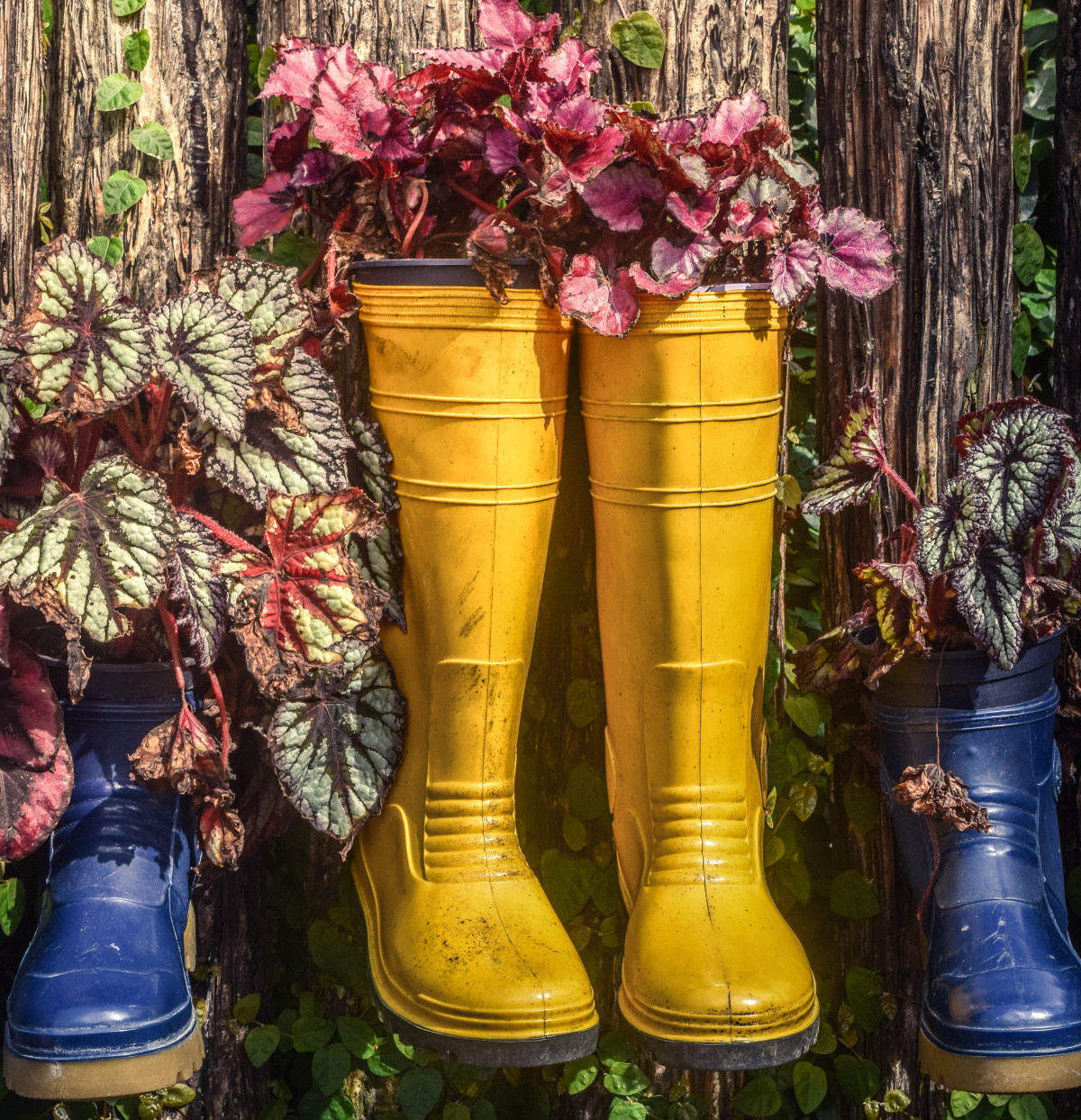 Flowers planted in Wellington boots
