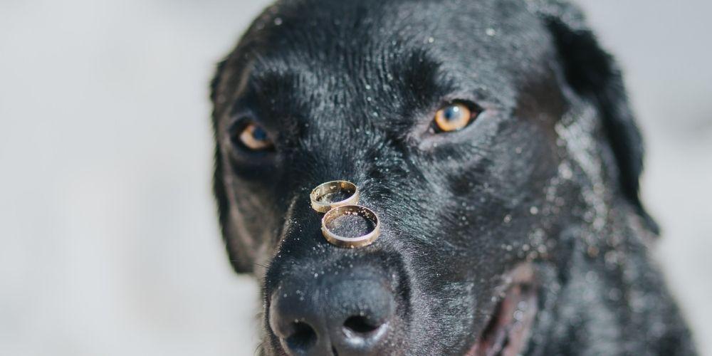 Votre chien pourra vous aider à faire une demande en mariage originale