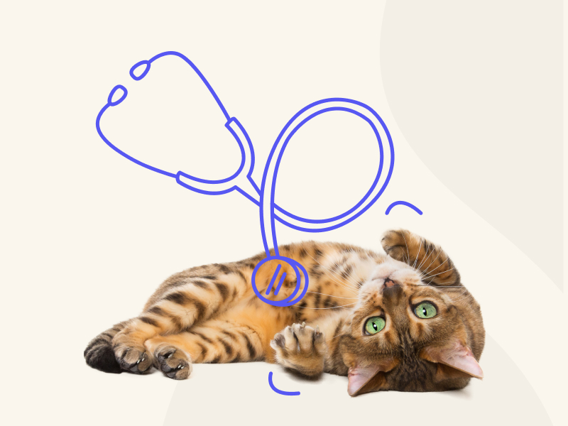 An orange cat laying underneath an illustration of a stethoscope.
