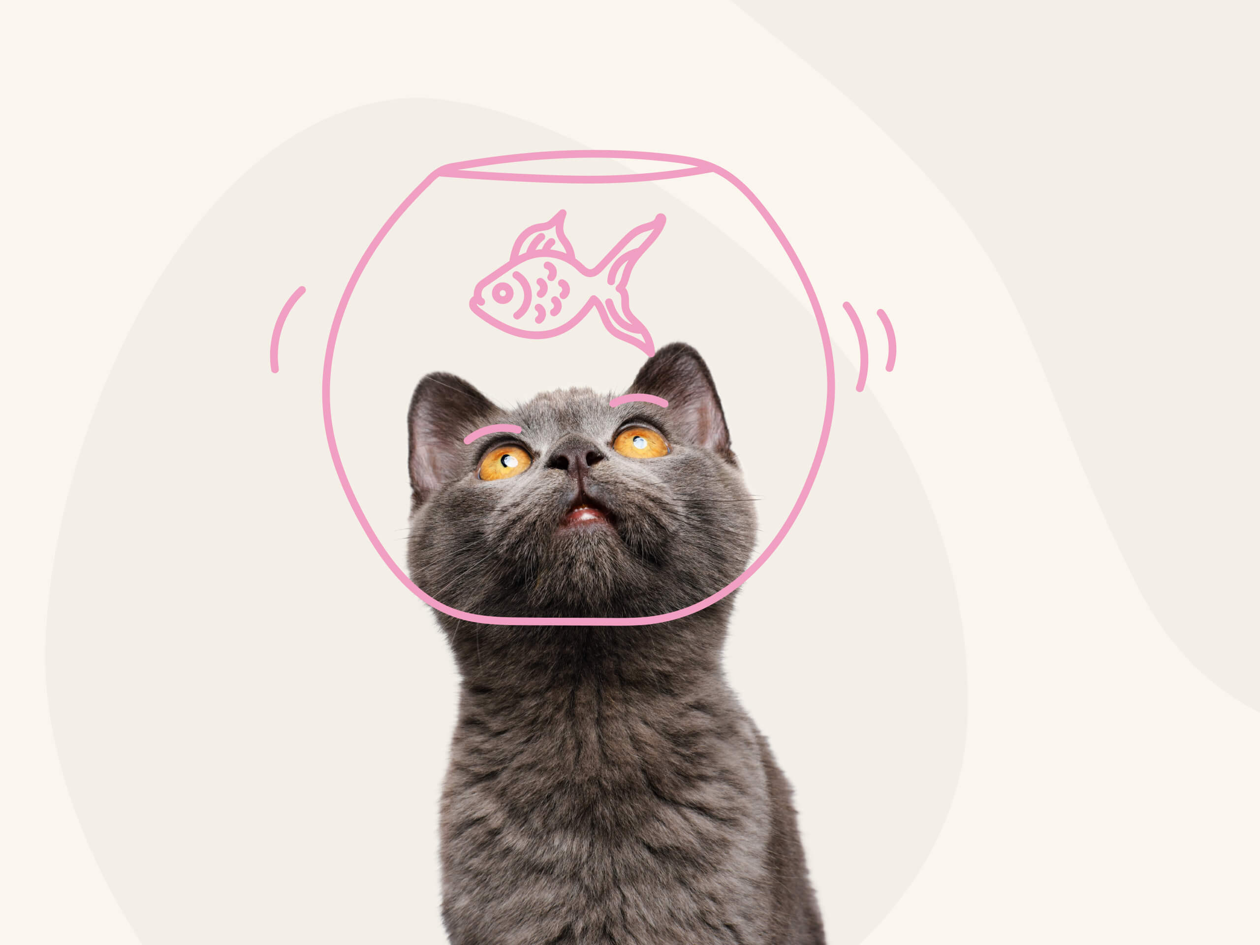 A grey cat with an illustration a fish bowl around their head.