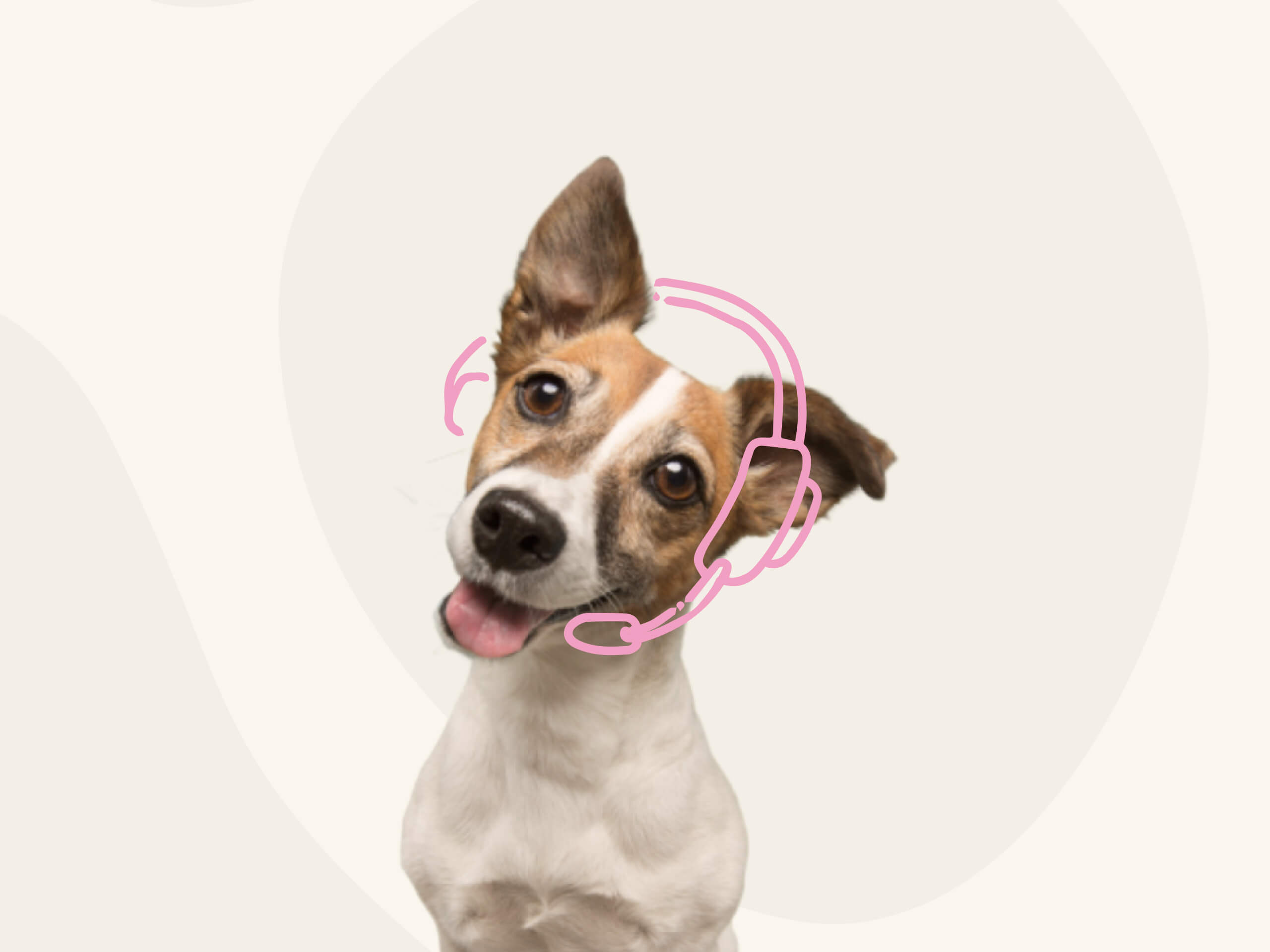 A mixed breed pup on a green background with an illustrated headset around their head.