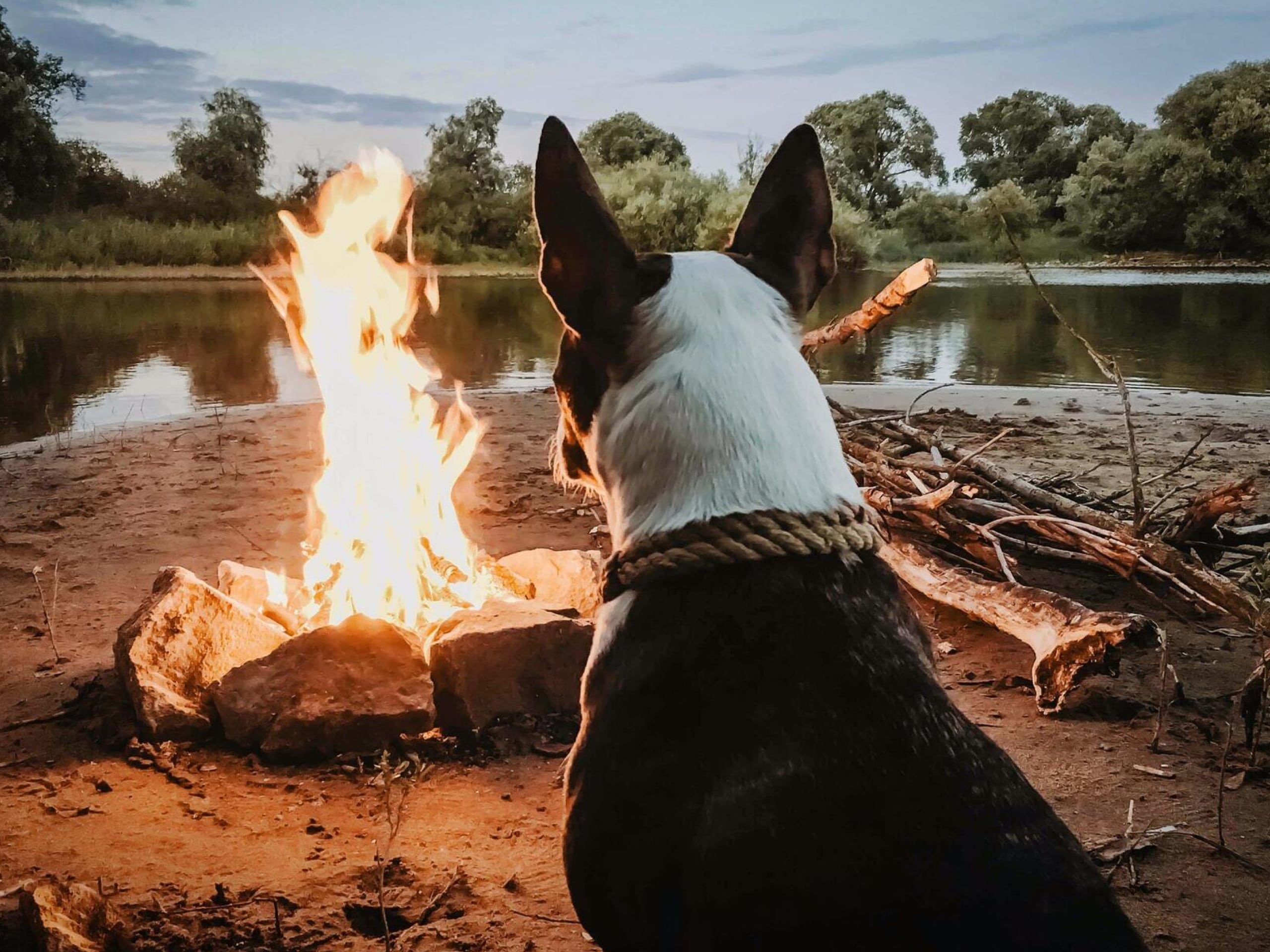 The back of a dog's head as they sit in front of a fire.