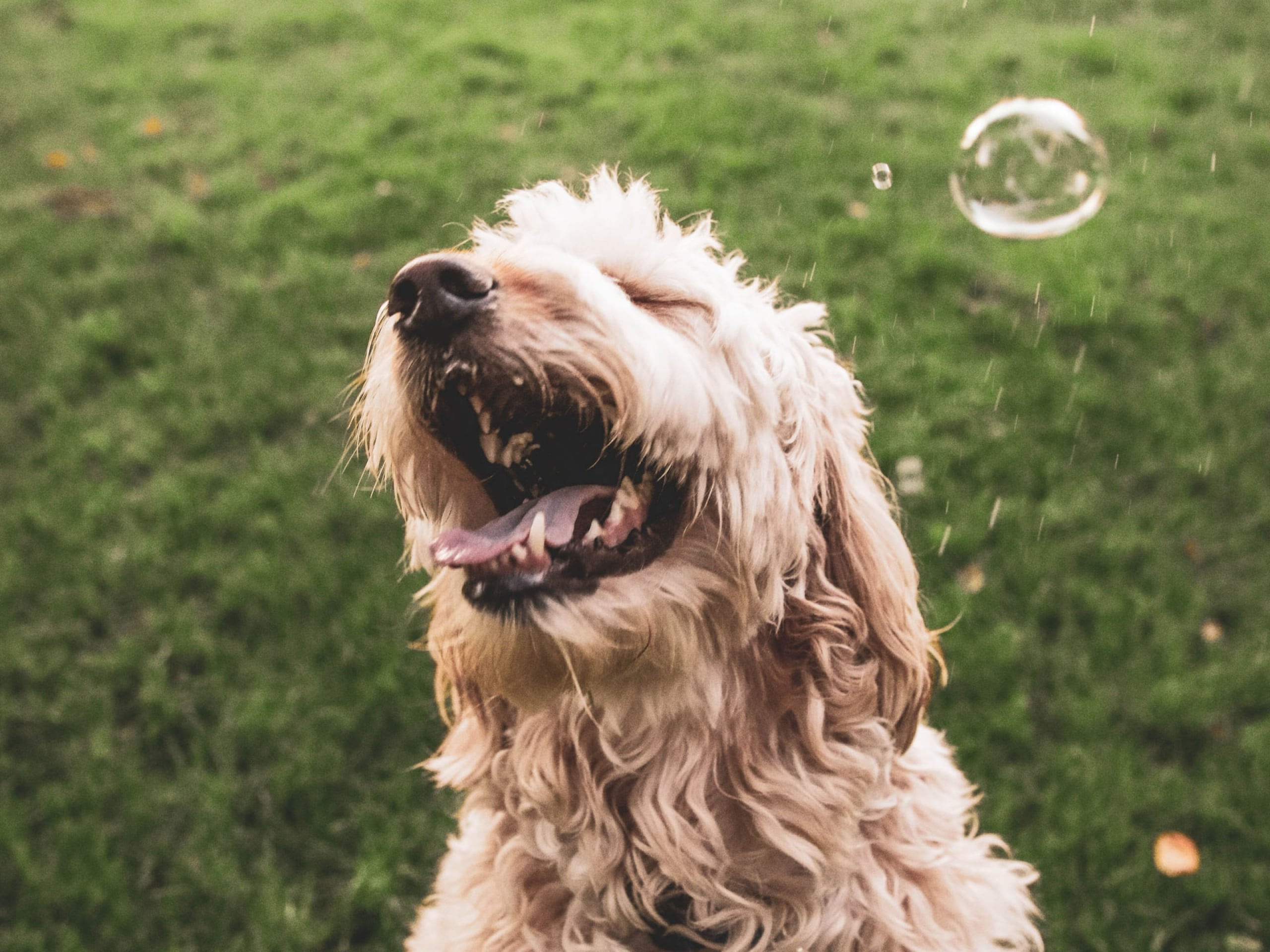Dog sneezing with a bubble near its face