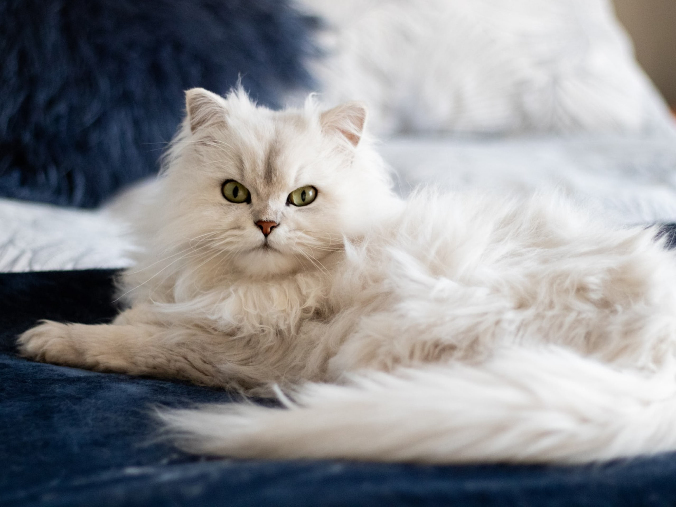 White cat sitting on a bed looking in to the camera