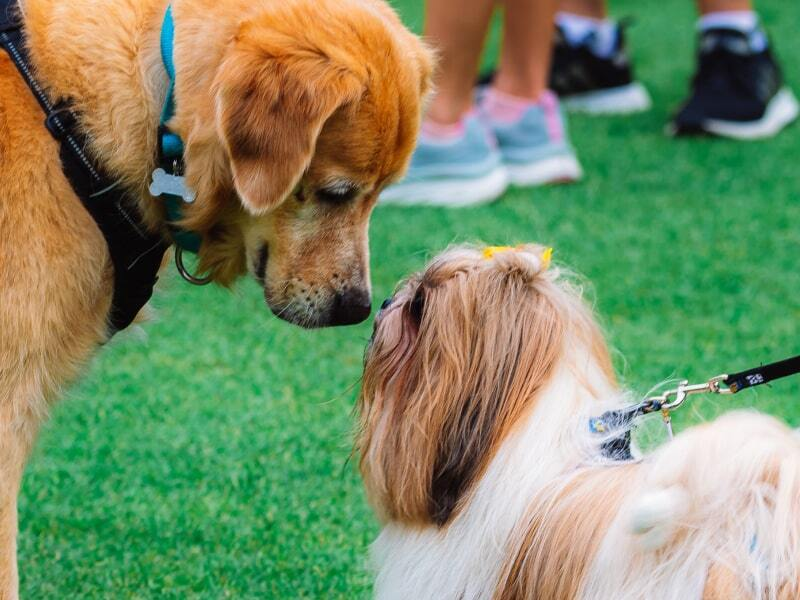 Two dogs sniffing each other's faces