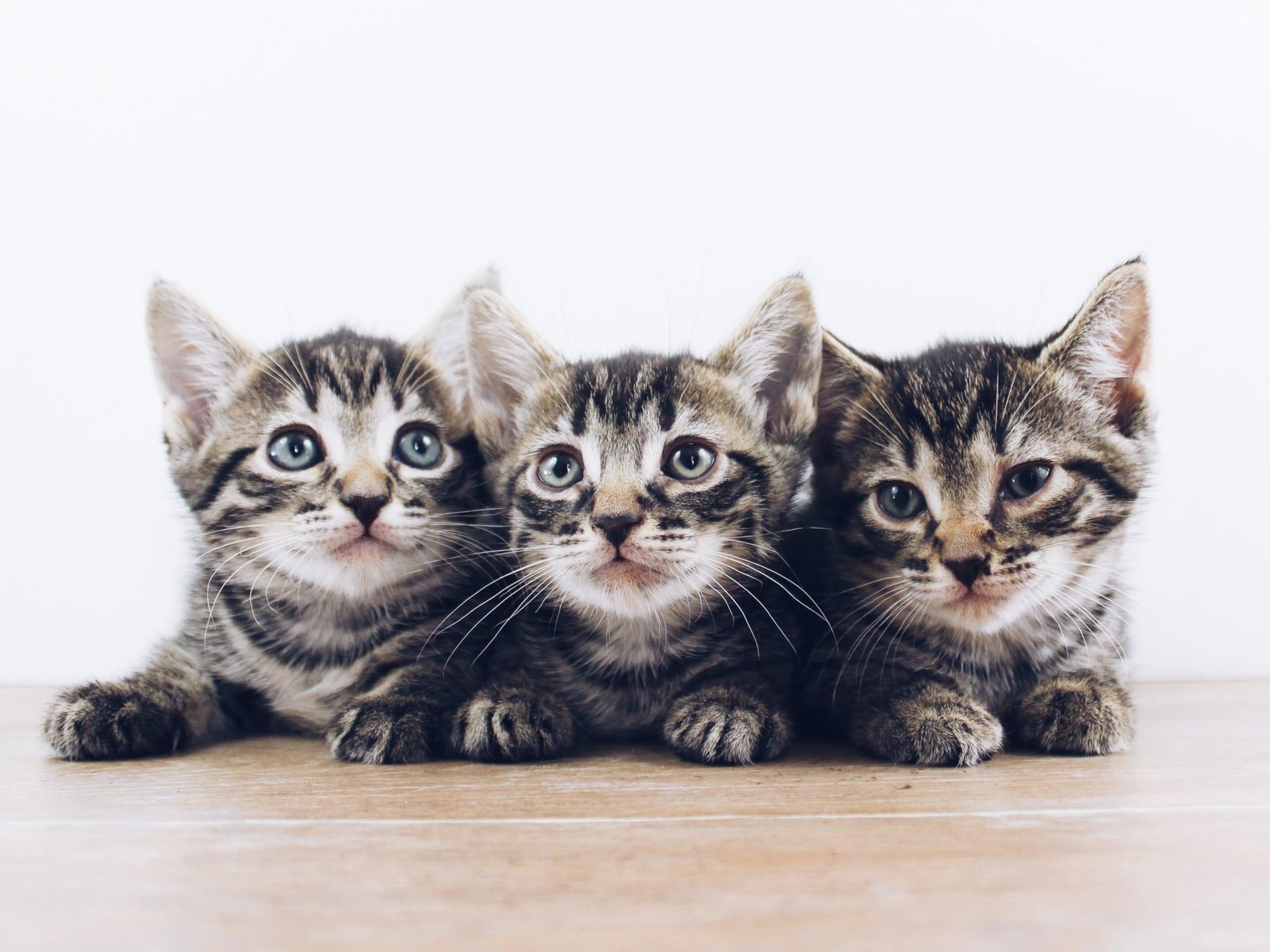 Three kittens look into the camera.