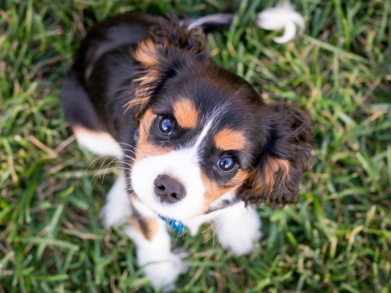 ringworm in dogs