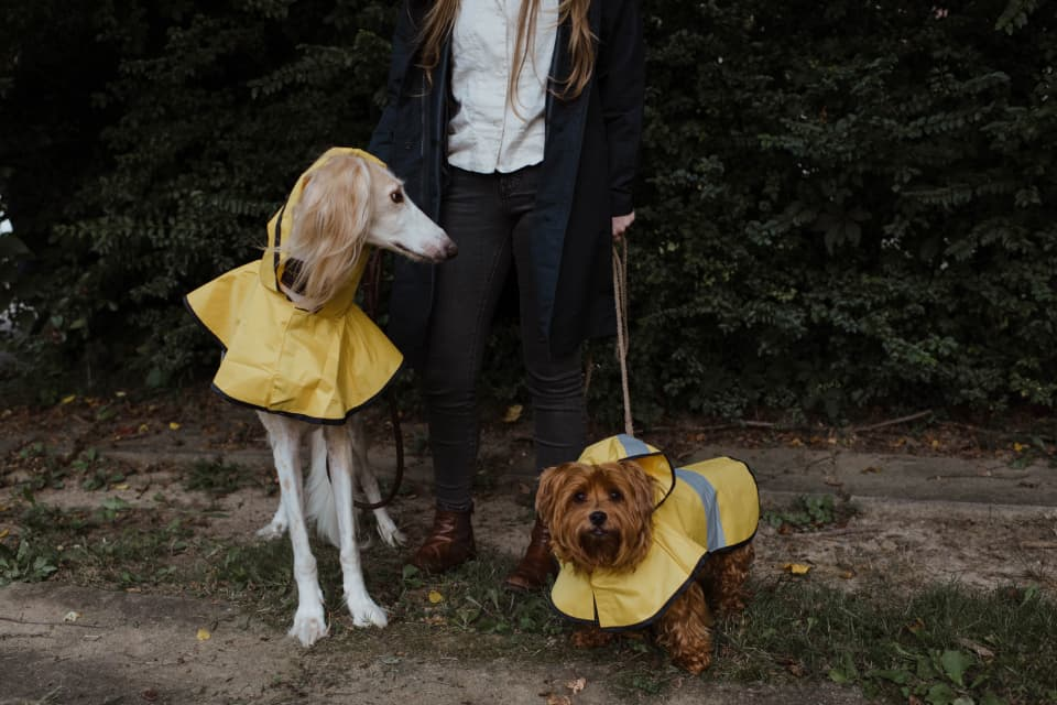 Dogs in coats, by Chewy from Unsplash