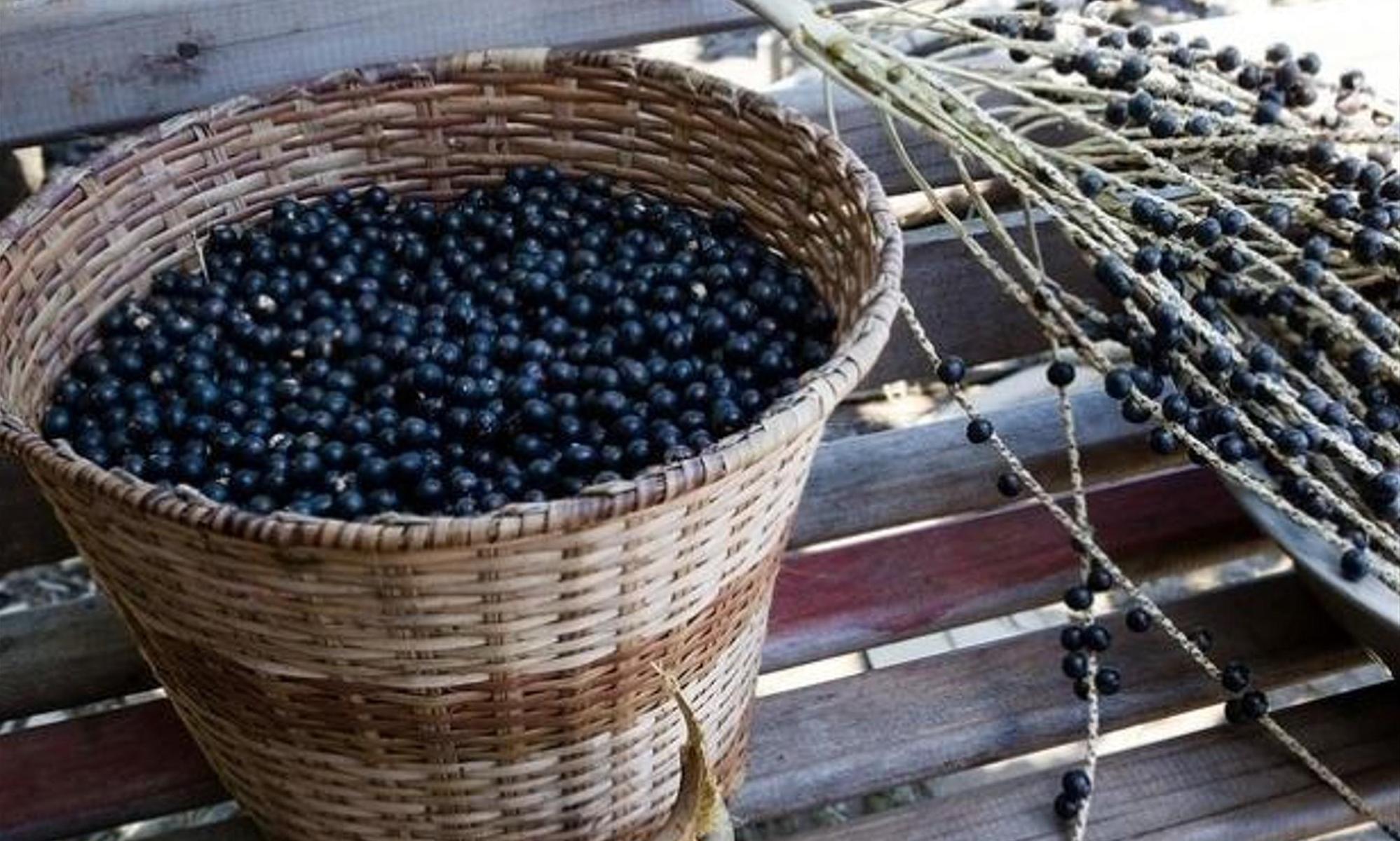 Acai-Beeren müssen aus Brasilien importiert werden und weisen daher eine schlechte Energiebilanz auf. Flickr.com