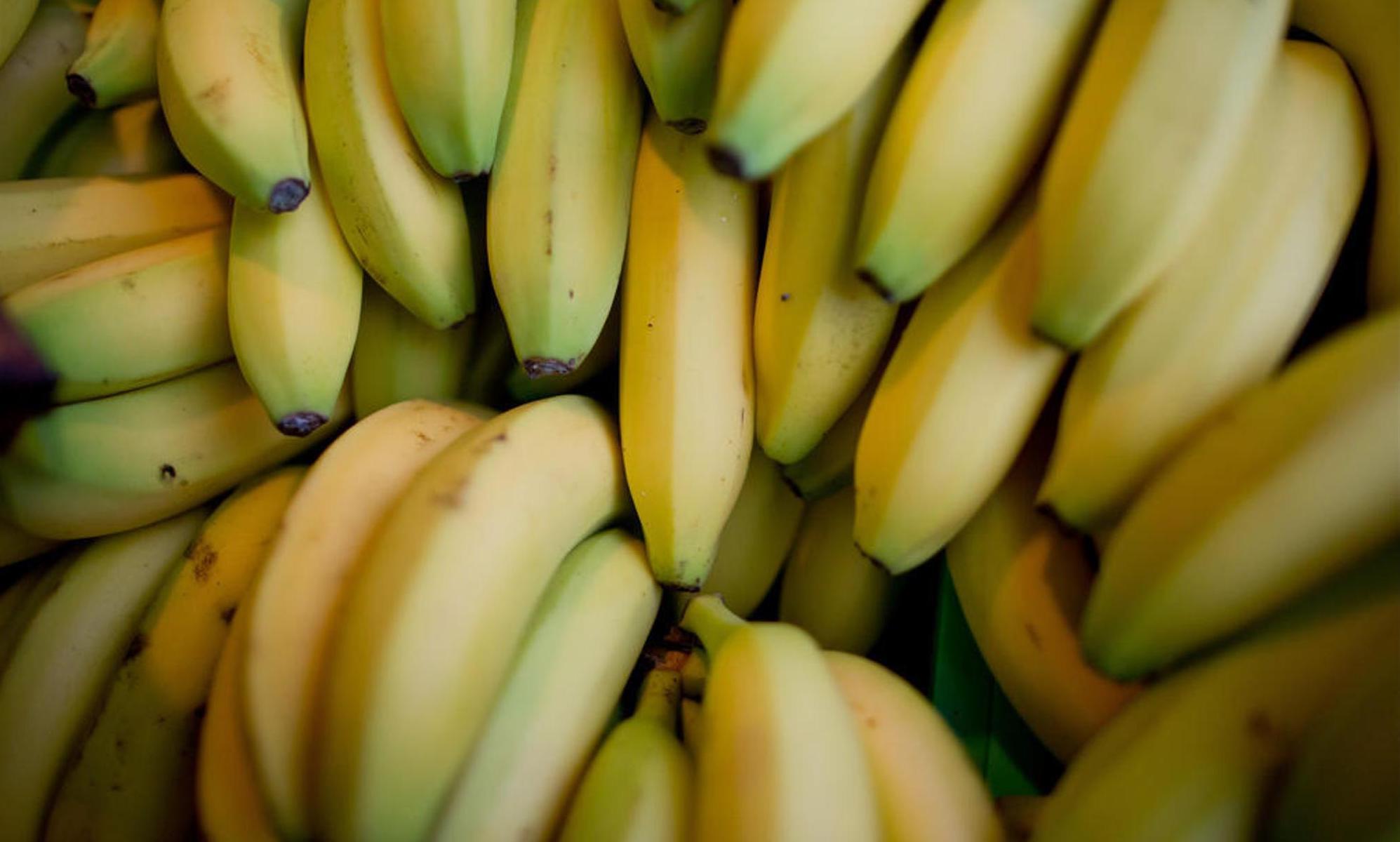 Das gleiche Problem bei Bananen: Die Früchte wachsen nur in Regionen mit tropischem Klima und werden aus Ländern wie Costa Rica, Mexiko oder Panama importiert. Daniel Karmann