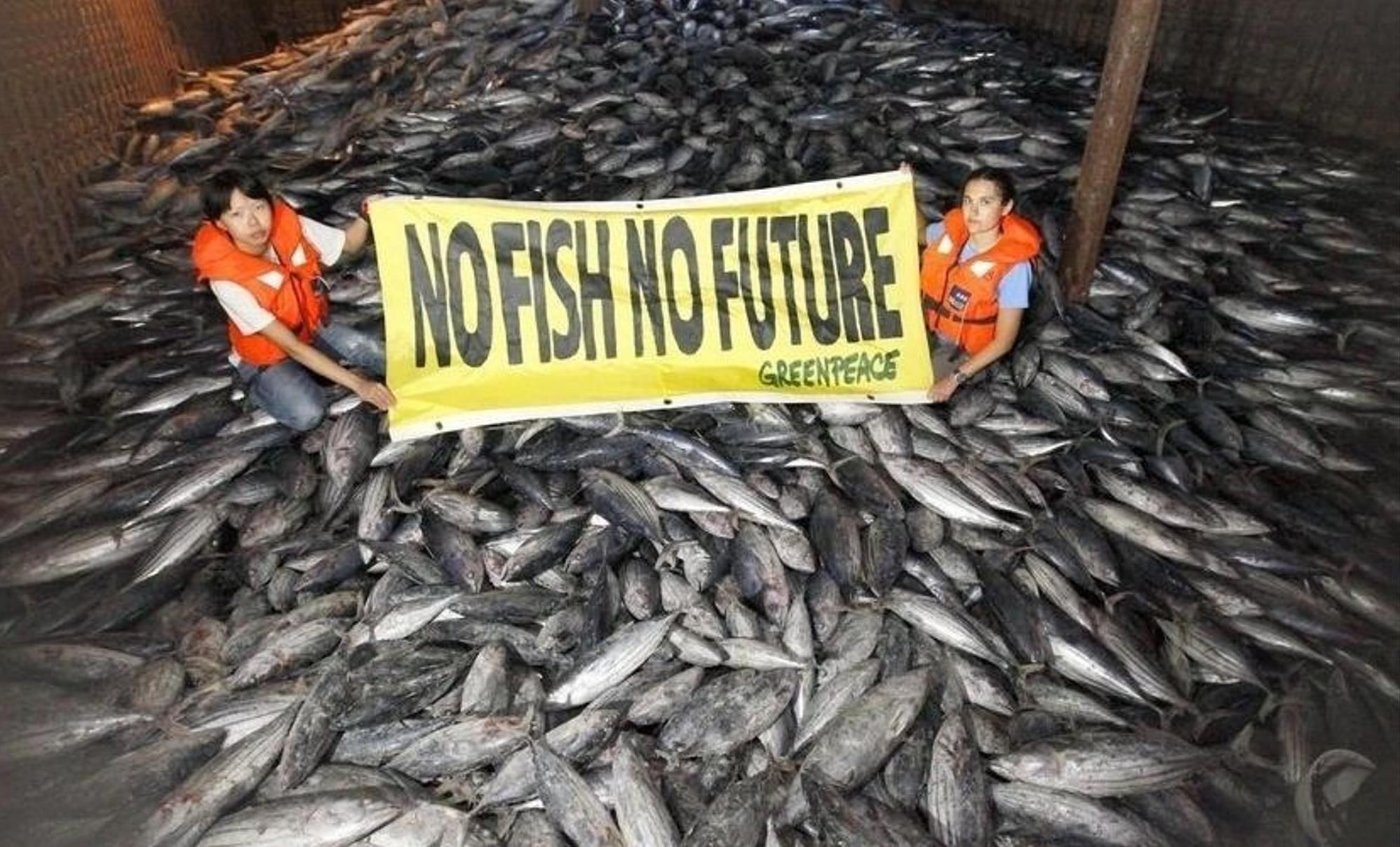 Umweltverbände wie Greenpeace warnen seit Jahren, dass manche Thunfischbestände überfischt seien und beim Fang unter anderem auch Meeresschildkröten oder Albatrosse getötet würden. Dadurch entsteht ein ökologisches Ungleichgewicht. epa/Alex Hofford