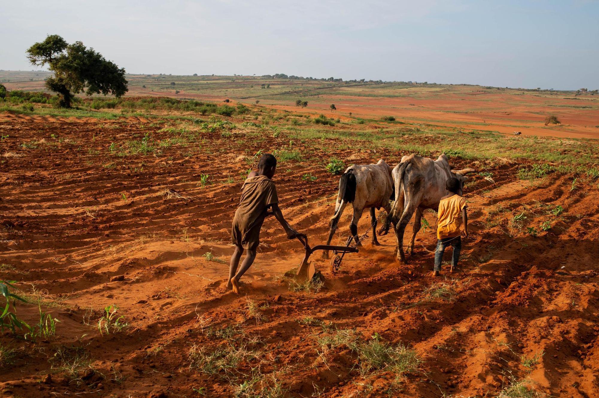 Wegen der zunehmenden Dürre ist zunehmend mit Hungersnöten zu rechnen. REUTERS