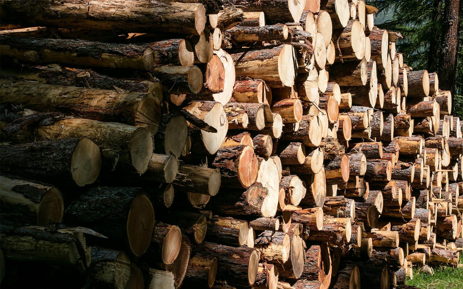 Aus einem Tal: Mondhaus-Besitzer wissen, woher die Rohstoffe für ihr Haus kommen. Sie sind bei dessen Entstehung dabei. Vom Baum im Wald...