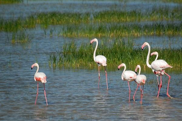 Donana National Park