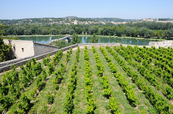 Avignon Vineyards