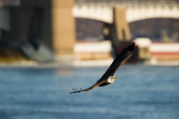 Eagle Mississppi