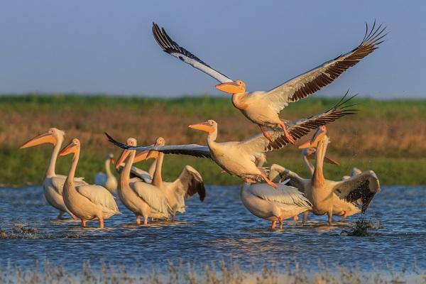 Stalks In The Danube Delta