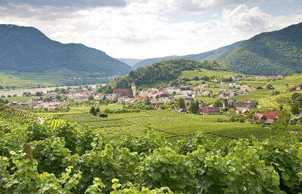 Vineyard At Spitz