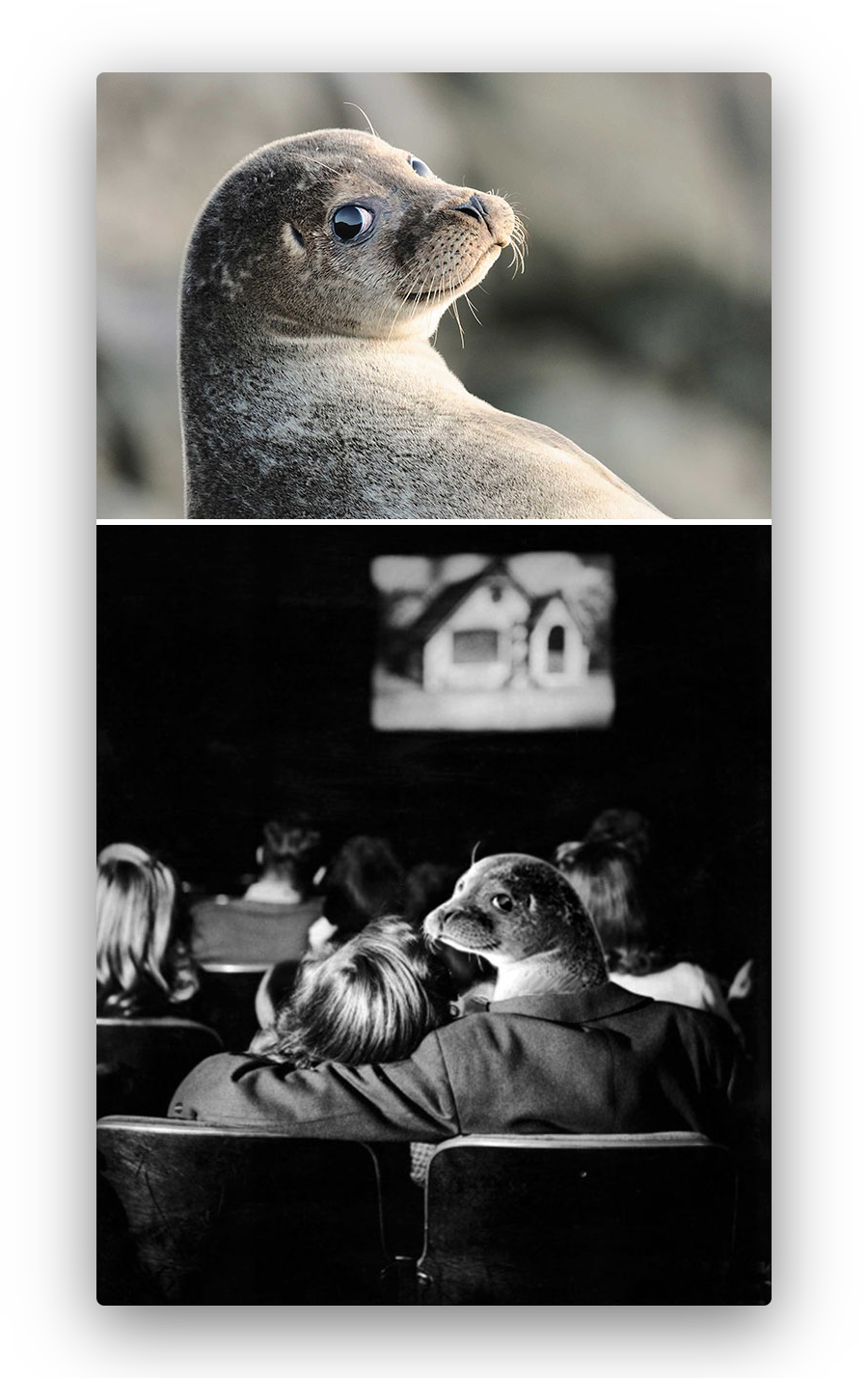 image of a seal flawlessly imposed into a movie theatre setting