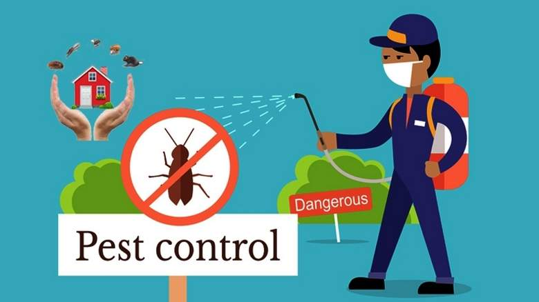 Top 5 Effective Methods Used by Exterminators for Pest Control