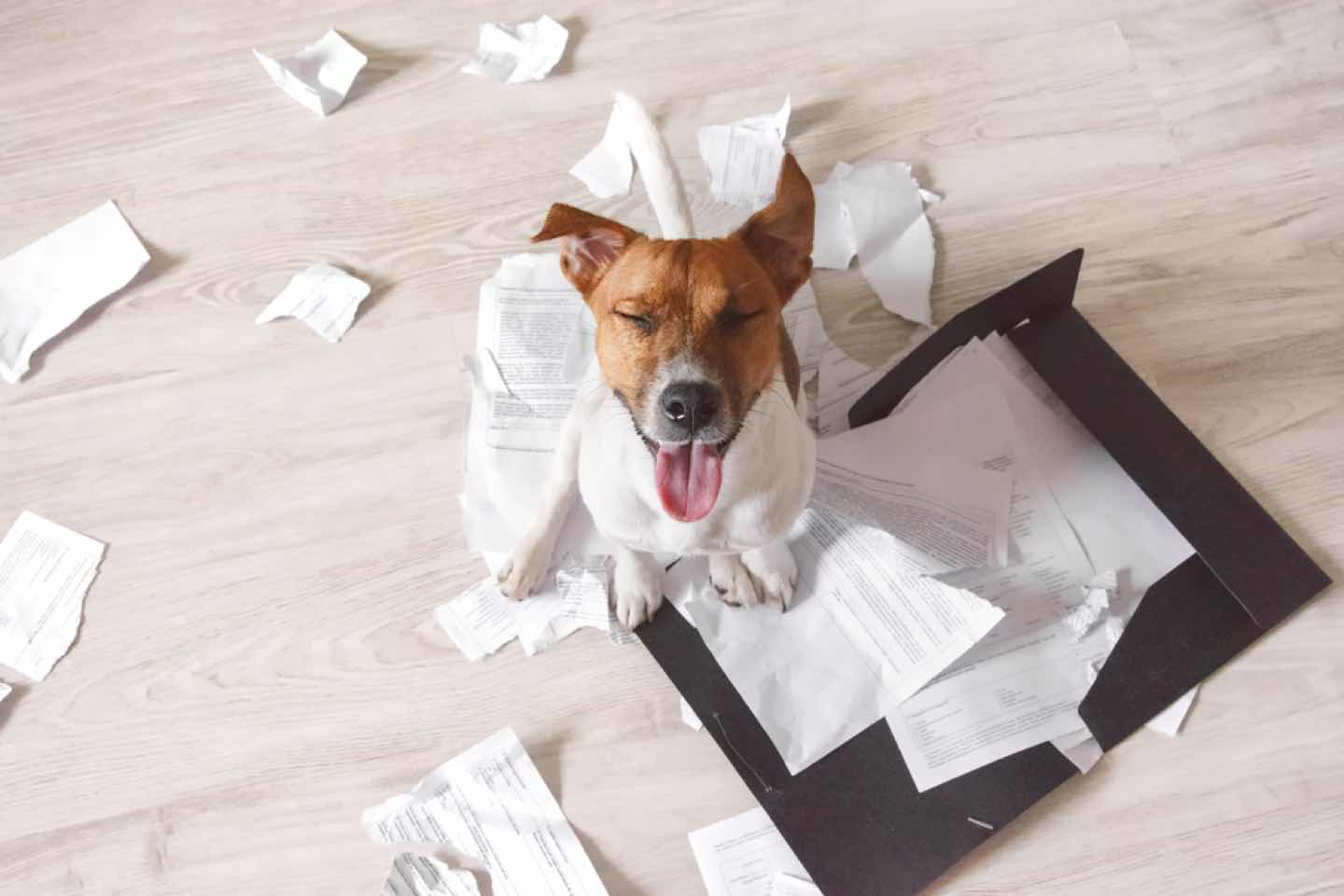 """""""My dog ate my tax return"""": when is it okay not to submit yours?"""