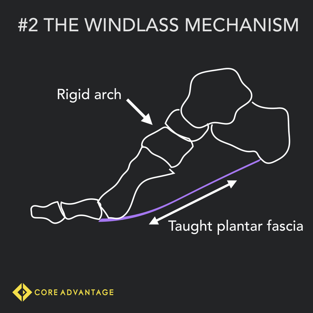 #2 The Windlass Mechanism