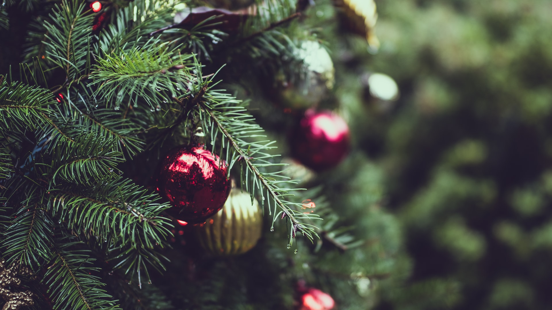5 Do's and Don't for Surviving the Holidays