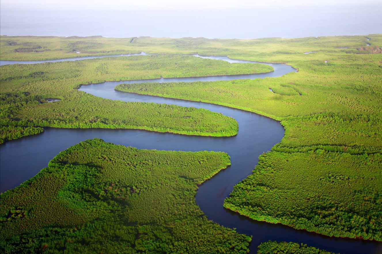 Virgin forests around a river